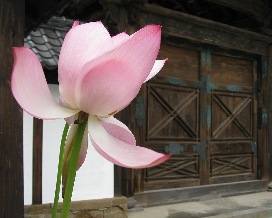 Lotus, Gate, Temple, Japan, Asia, Architecture, Floral