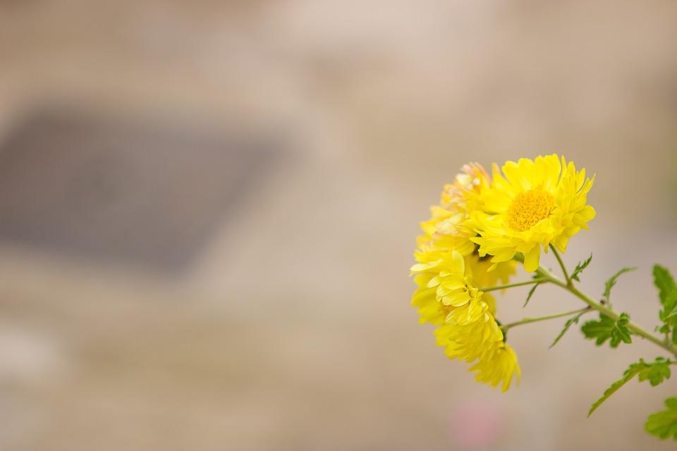 Flowers, Garden, Pets, Yellow, Gate