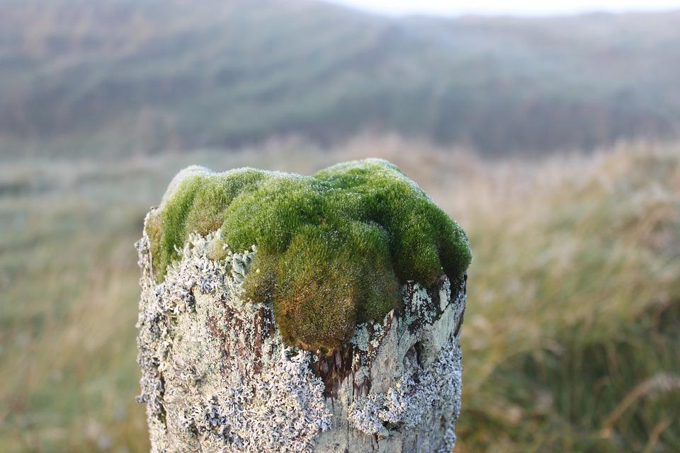 Moss, Lichen, Gate Post, Fence, Fog, Green