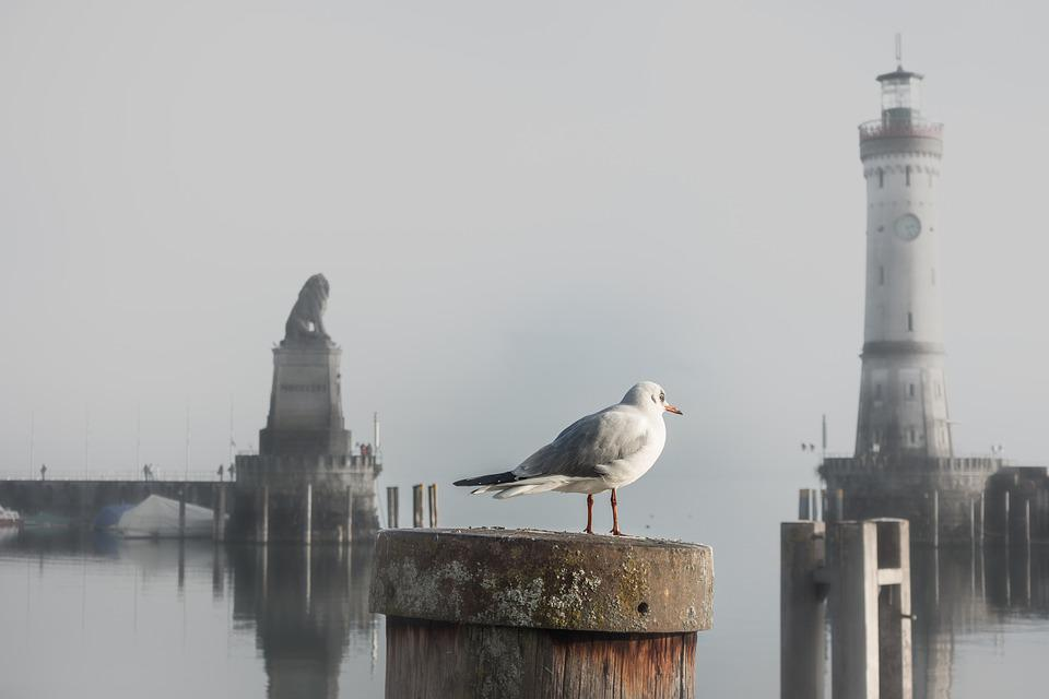 Seagull, Port, Gateway, Water, Lake Constance, Lindau