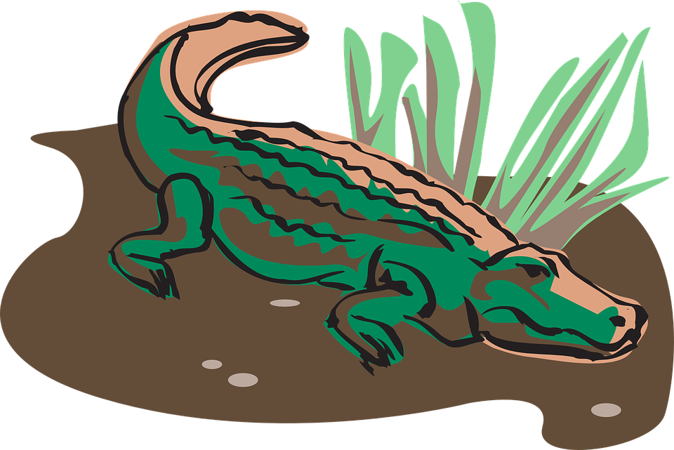 Crocodile, Alligator, Gator, Mud, Grass, Reptile