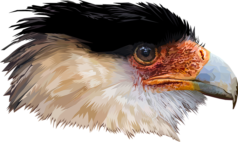 Head, Bird, Gavião, Nature