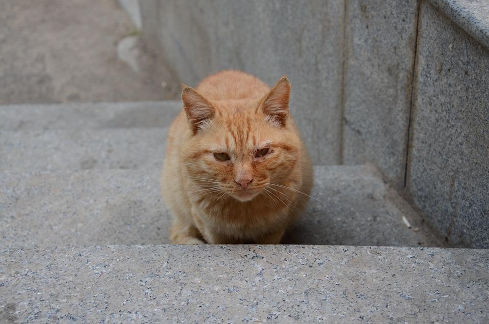 Cat, Animal, Cute, Nature, Kitten, Gaze