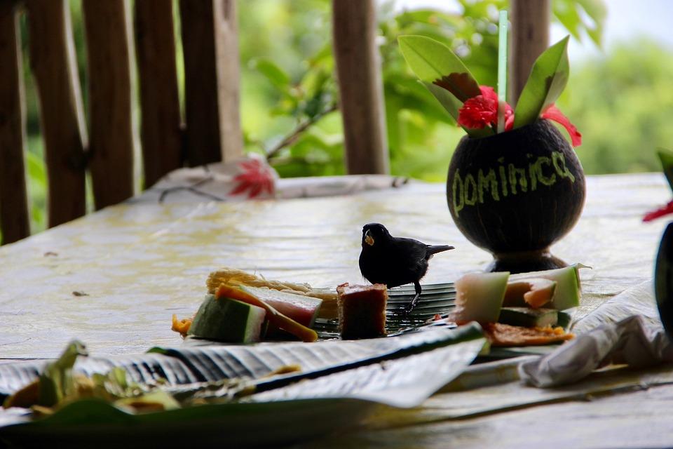 Dominica, Bird, Hunger, Cute, Gedeckter Table, Cheeky