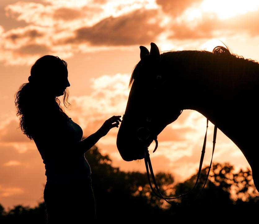 Horse, Gentle, Animal, Connectedness, Love, Trust