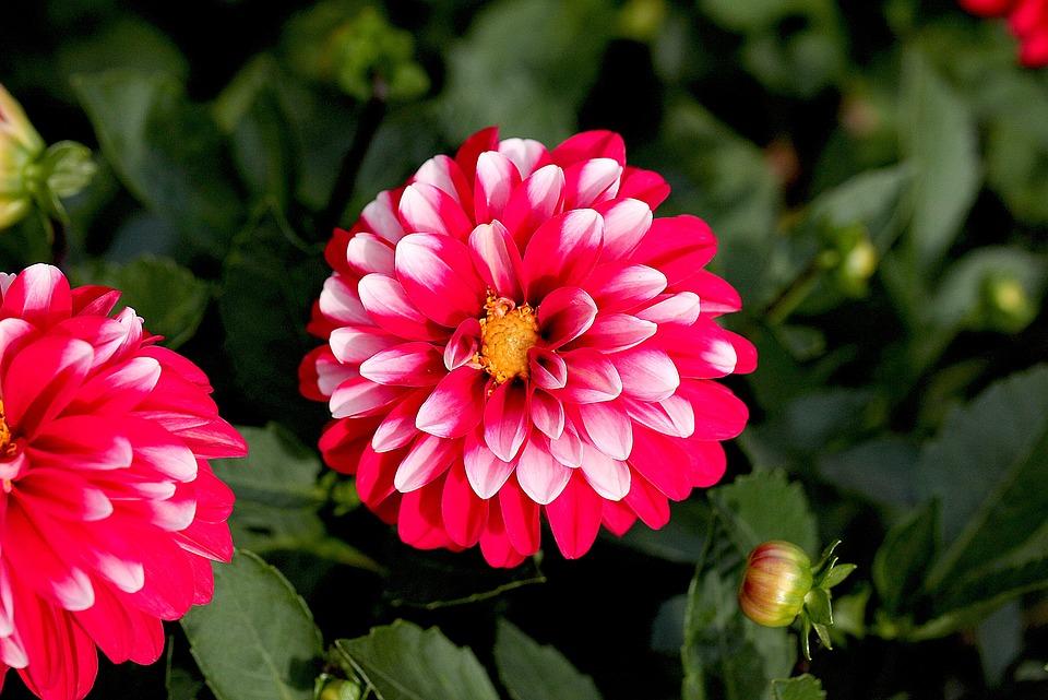 Flower, Georgia, Garden, In The Park, The Delicacy