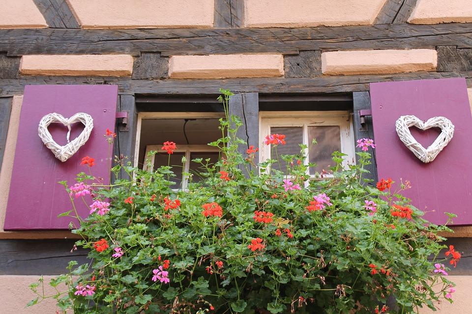 Window, Geranium, Truss, Flower Box, Shutters, Purple