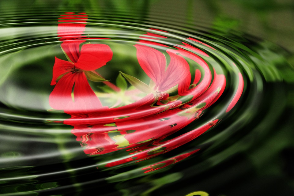 Geranium, Wave, Water, Rings, Circle, Waves Circles