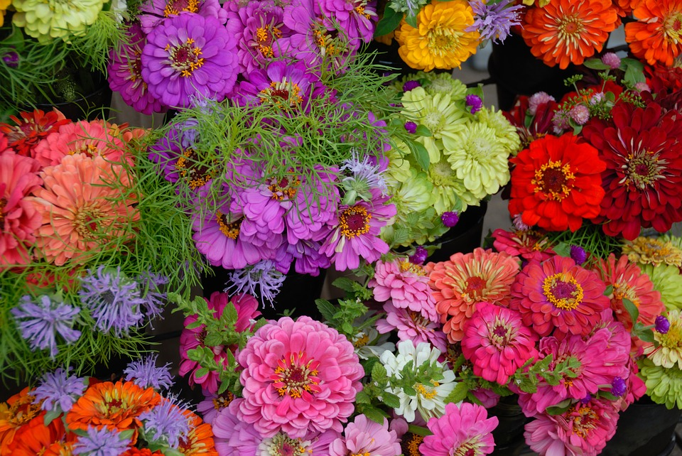 Gerber Daisies, Colorful, Vibrant, Flower, Floral