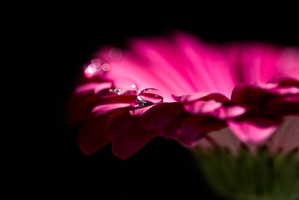 Gerbera, Blossom, Bloom, Red, Flower, Nature