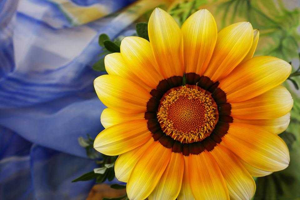 Gerbera, Closeup, Bright Flower, Close Up