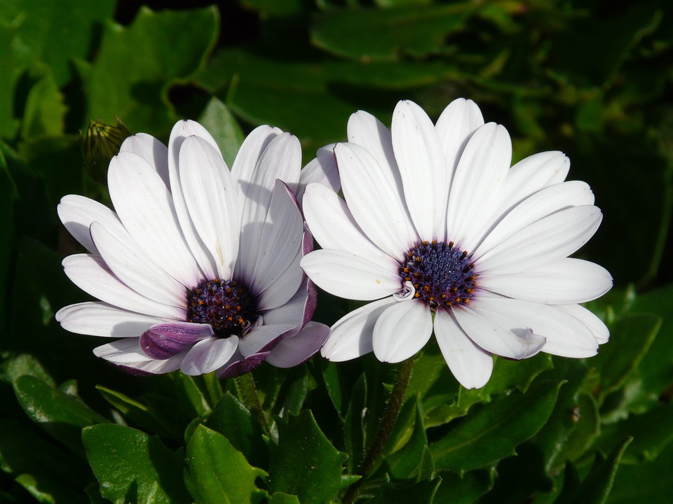 Gerbera, Flowers, Plant, Summer, White, Cut Flowers