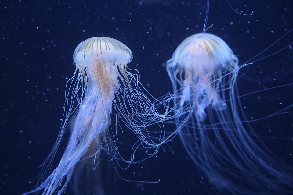 Jellyfish, Berlin Zoo, Germany