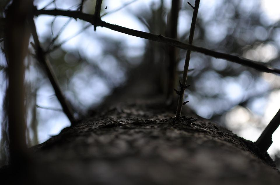 Bodenrod, Macro, Germany, Forest, Nature, Tree, Hesse