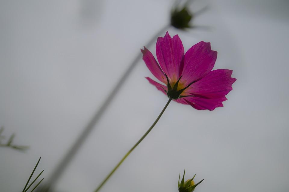 Gesanghua, Macro, Flowers