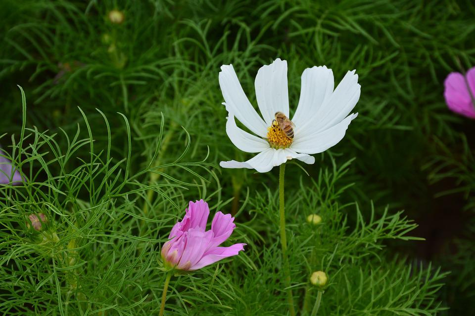 Flower, Gesanghua, The Scenery, Beautiful, Pretty