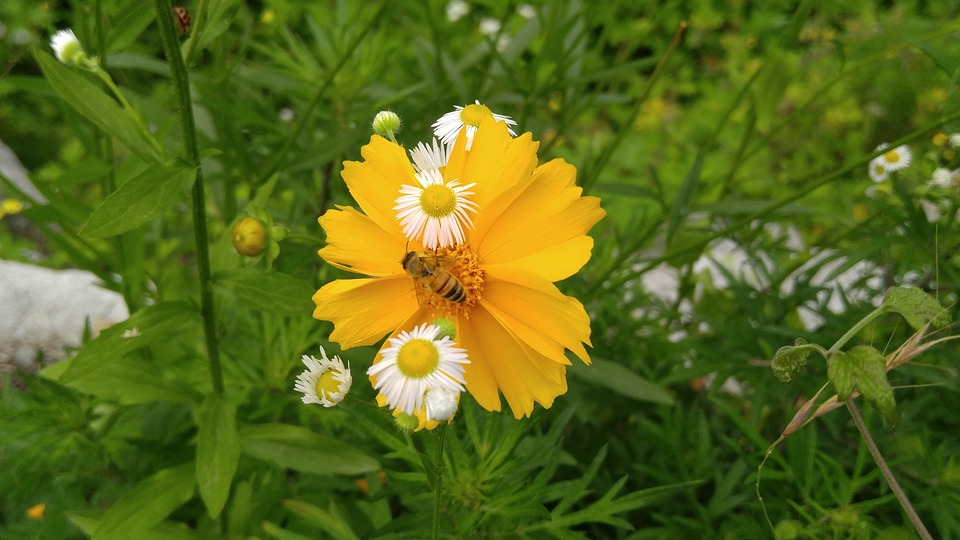 Geumgyeguk, Bee, Wildflower