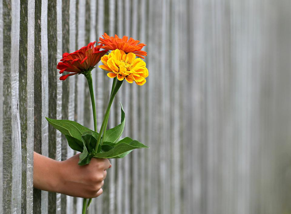 Free photo Gift Fence Hand Give Bouquet Love Congratulation - Max Pixel
