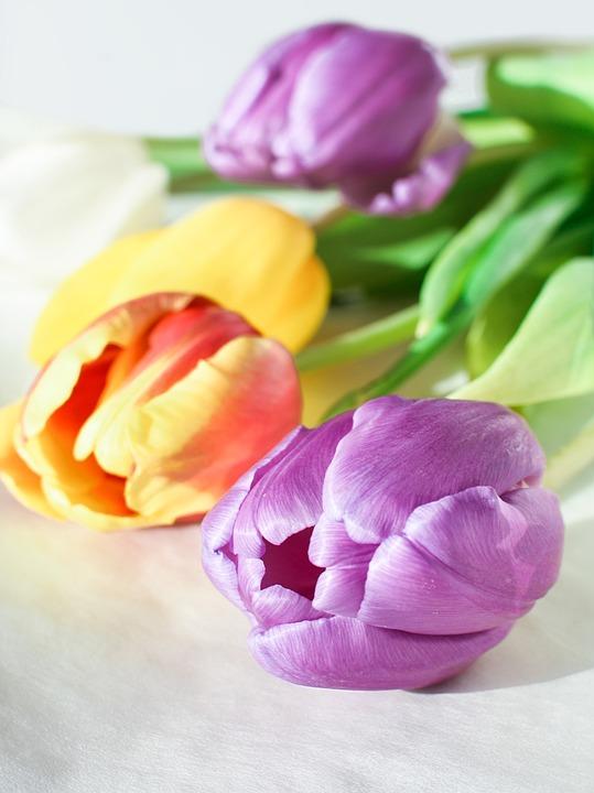 Flower, Tulip, Nature, Gift, Floral, Bouquet, Petal