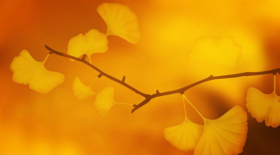 Ginkgo, Ginkgo Tree, Branch, Ginkgo Leaves, Plant