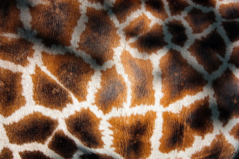 Giraffe's Coat, Giraffe, Manto, Fur, Mantle, Animal