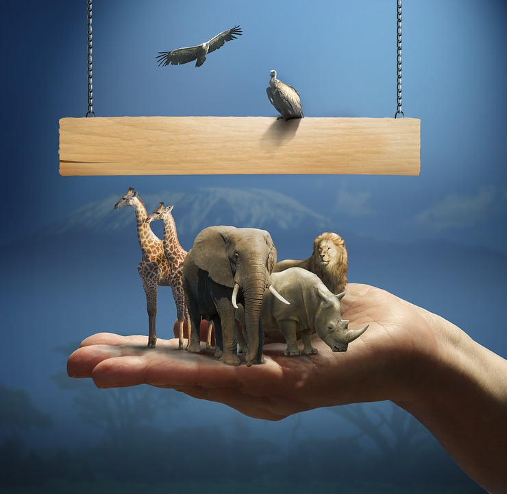Africa, Giraffe, Lion, Rhino, Animals, Wild, Nature