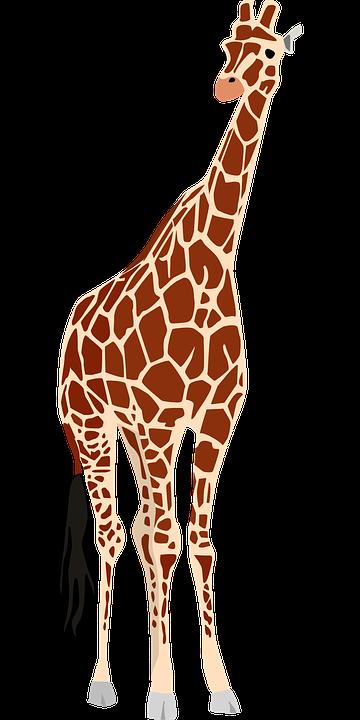 Giraffe, Africa, Safari, Wildlife, Animal, Zoo, Nature