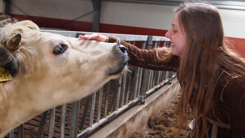 Cow, Girl, Pats, Sweet, Blonde, Happy