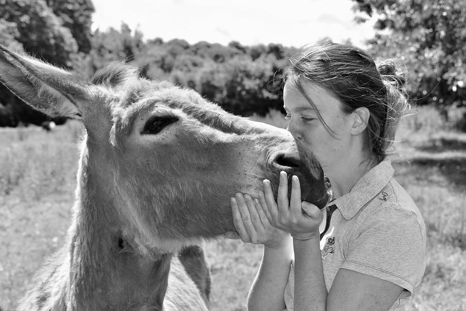 Kiss, Kisses, Girl Complicity Donkey