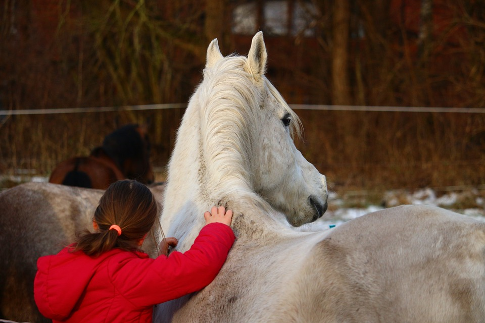 Horse, Mold, Girl, Friendship, Winter