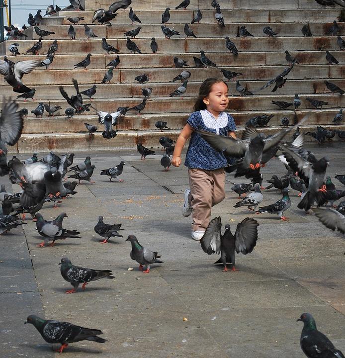 Girl, Pigeons, Animals, Running