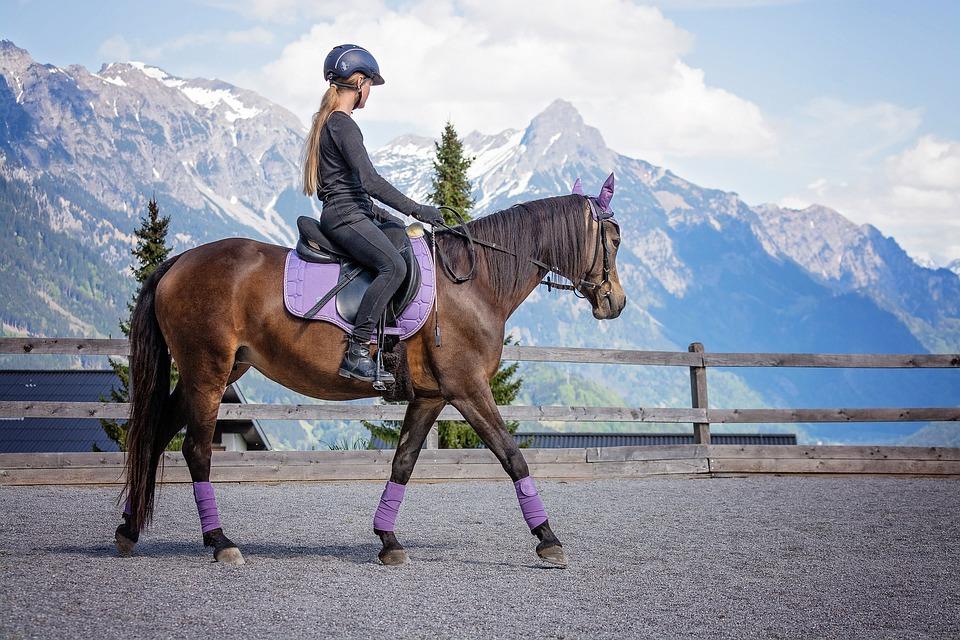 Horse, Girl, Riding Lessons, Pony, Riding Pony