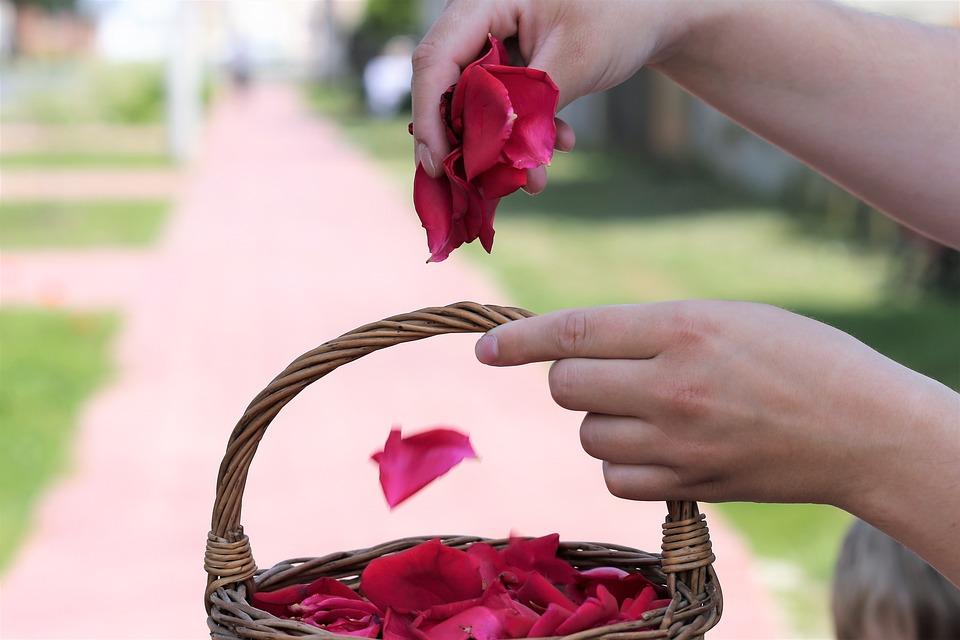 Corpus Christi Feast, Basket, Girl Throw Rose Petals