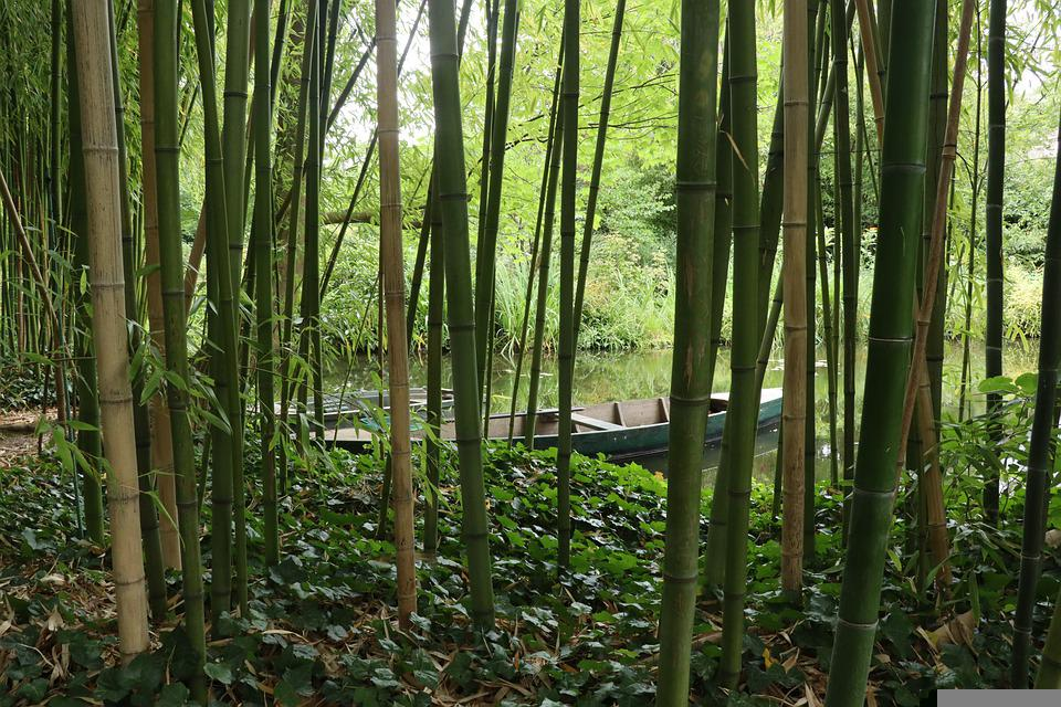 Giverny, Boats, Bamboo, Nature, Japanese, Garden, Green
