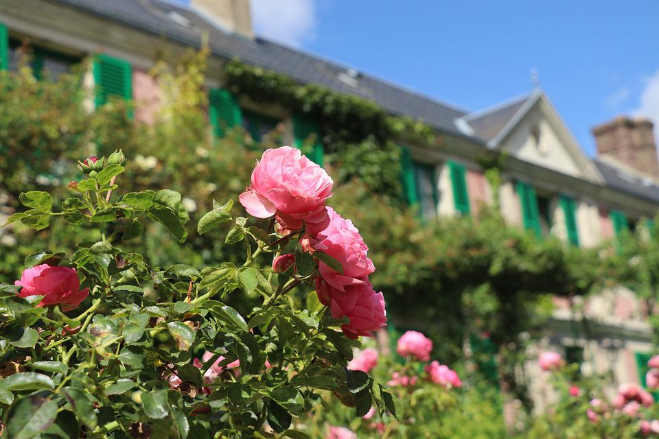 Giverny, Monet, Nature, Roses, Plant, Garden, Flowers