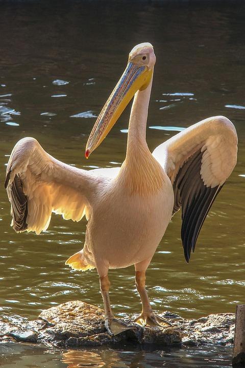Big, Bird, Zoo, Giza, Egypt, Holiday, Visit, Cute