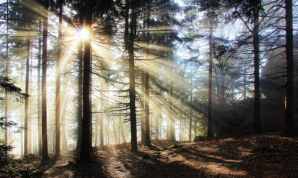Fog, Bill, Atmosphere, Sun, Forest, Glade, Mystical