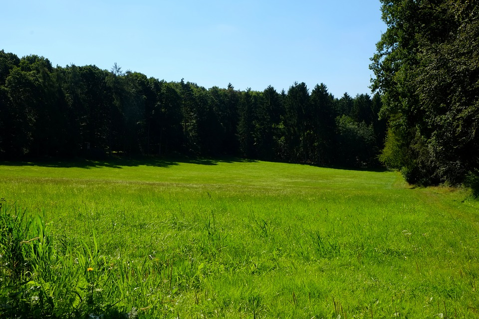 Glade, Meadow, Nature, Forest, Summer, Landscape