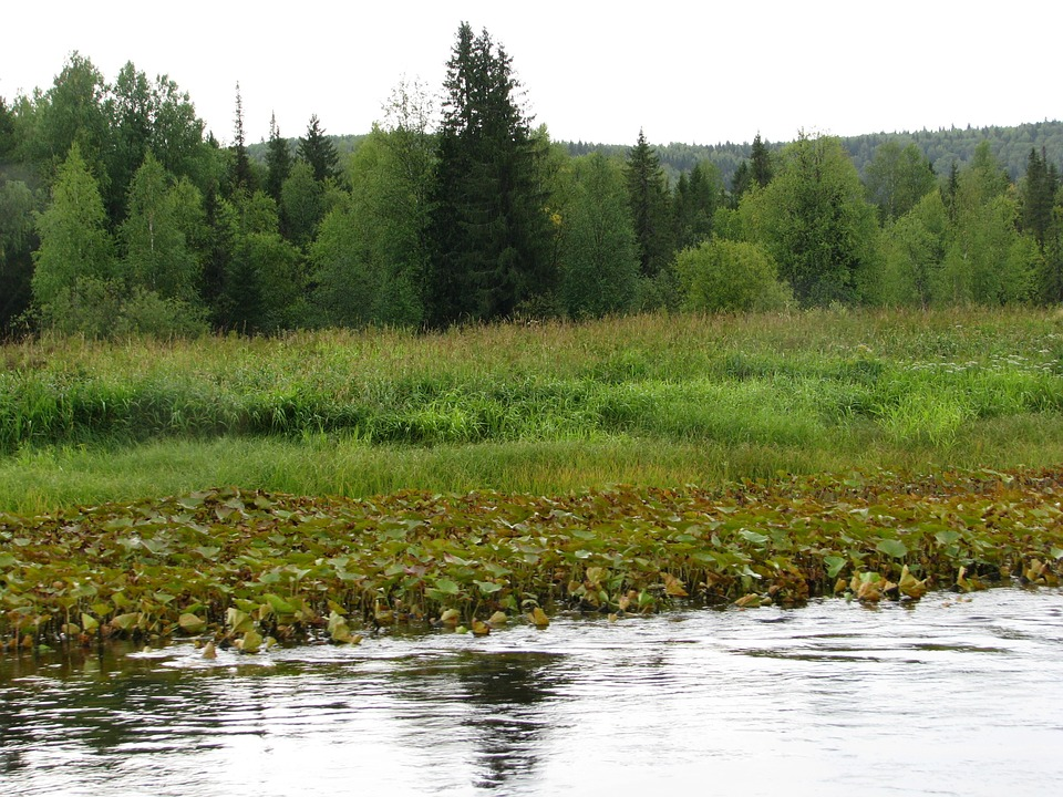 The Vishera River, Forest, Glade, Open Space, Dahl