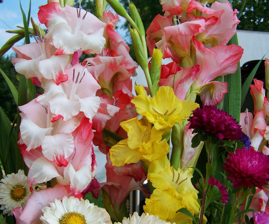 Bunch Of Flowers, Gladiolus, Cut Flower
