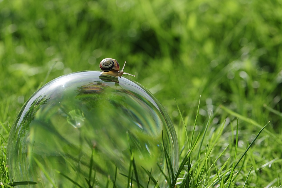 Snail, Glass Ball, Nature, Globe Image, Ball