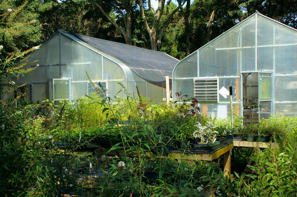 Greenhouse, Glass, Buildings, Plants, Protective