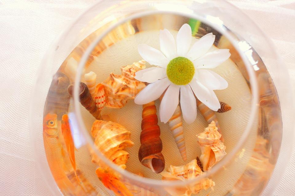Shell, Seashell, Flower, Floating, Float, Glass