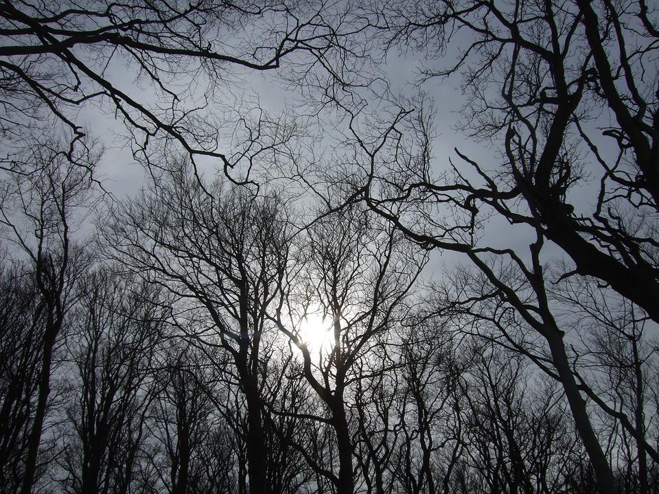 Sky, Trees, Sun, Winter, Gloomy, Dark, Scary, Creepy