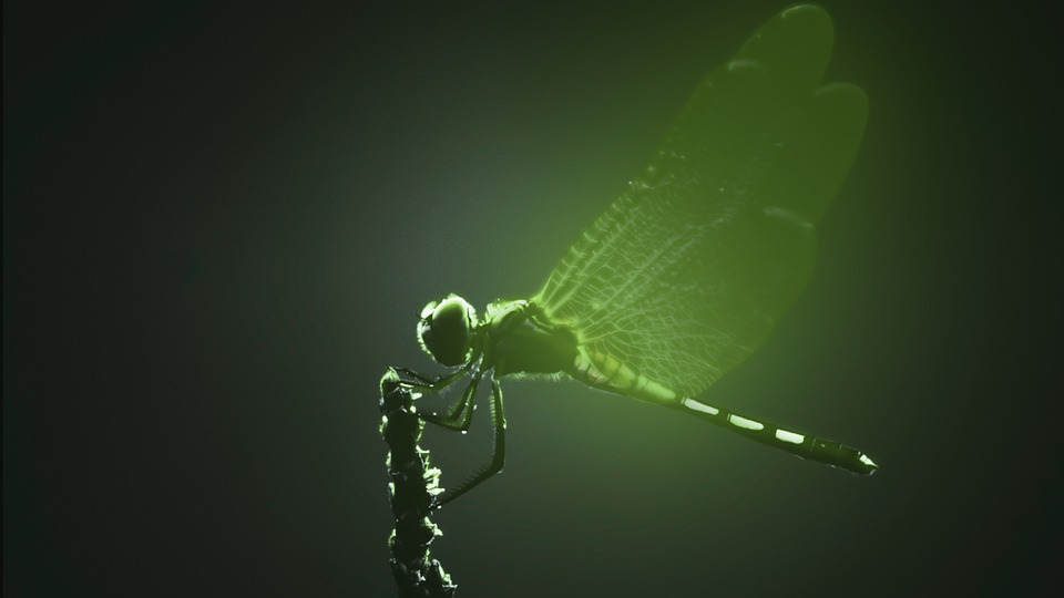 Dragonfly, Insect, Green Glow, Glow, Wings