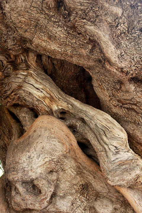 Tree, Olive Tree, Tribe, Gnarled, Old, Nature, Old Tree