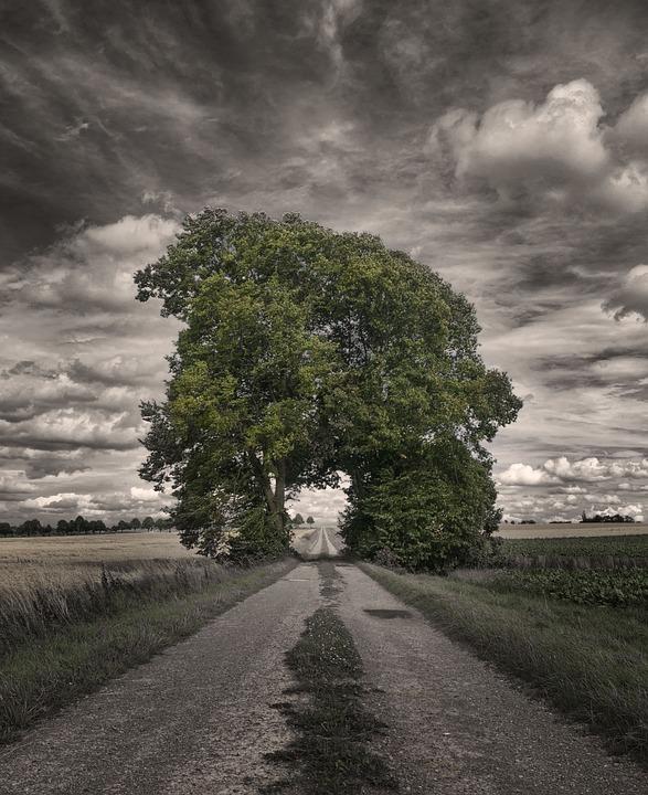 Grove Of Trees, Away, Tree, Goal, Mood, Landscape