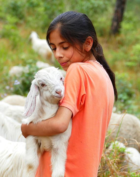 Child, Goat, Hug, Holding, Meadow, Brunette, Lamb