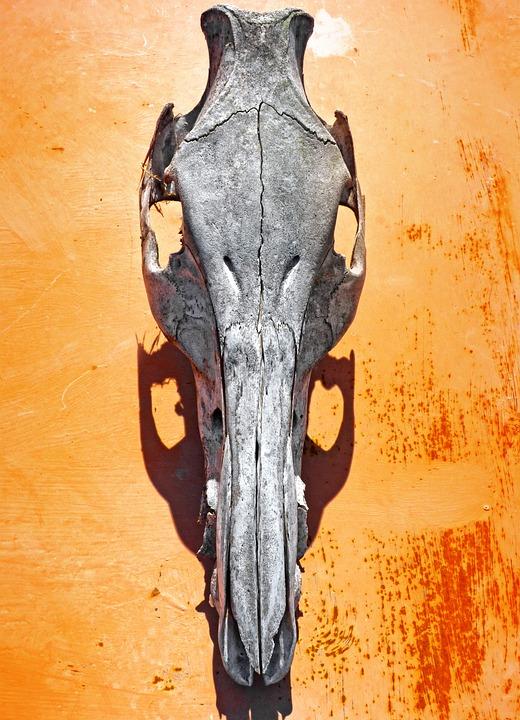 Skull, Goat, Sinister