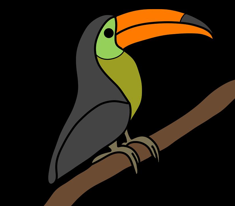 God's Creation, Toucan, Bird, Colour, Animal, Flying